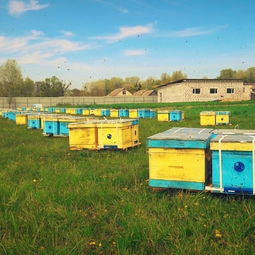 01_Pasika21_Ukrainian_Honey_Apiary_5.jpeg