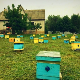 10_Pasika21_Ukrainian_Honey_Apiary_1.jpeg