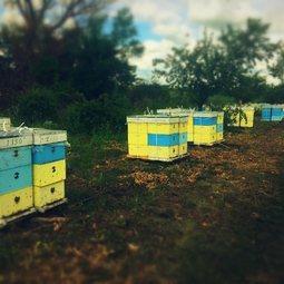 21_Pasika21_Ukrainian_Honey_Apiary_8.jpg